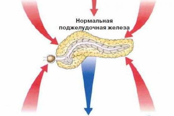 Увеличена поджелудочная железа у ребенка причины и лечение диета