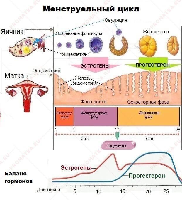 Эндометриоз матки:  симптомы и лечение у женщин. советы врача-гинеколога