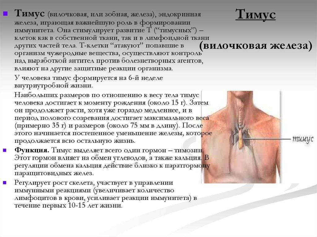 Тимус – что это? роль тимуса на первому году жизни ребенка | медицинский центр «президент-мед»