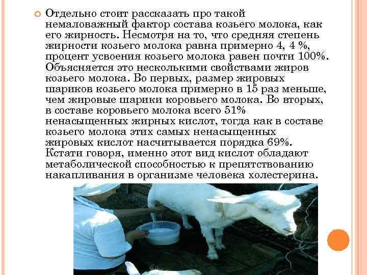 Можно ли козье молоко при грудном вскармливании кормящей маме