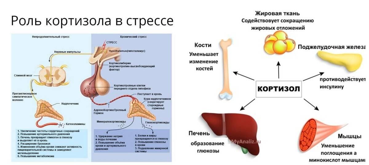 Гиперпролактинемия у мужчин. повышение пролактина в анализе крови - медицинский центр «эхинацея»