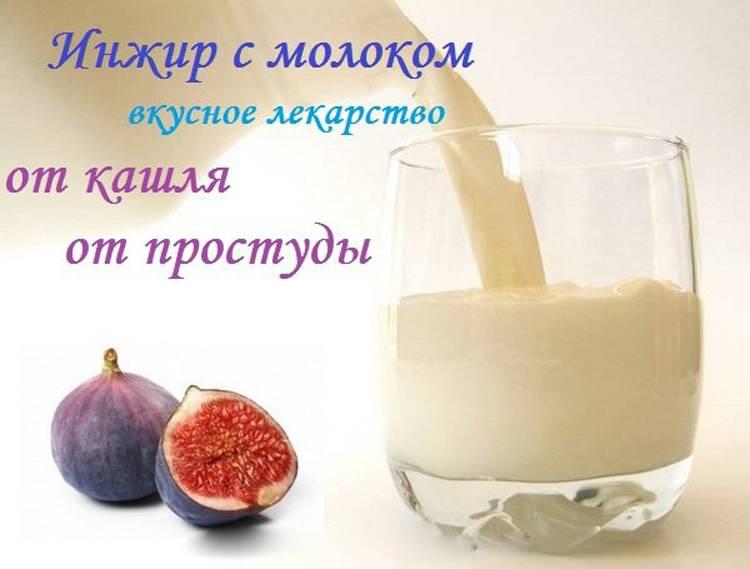Молоко с инжиром от кашля: рецепты для детей и взрослых, при беременности