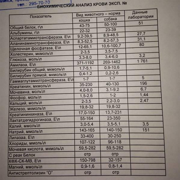 Антистрептолизин-о (асл-о)