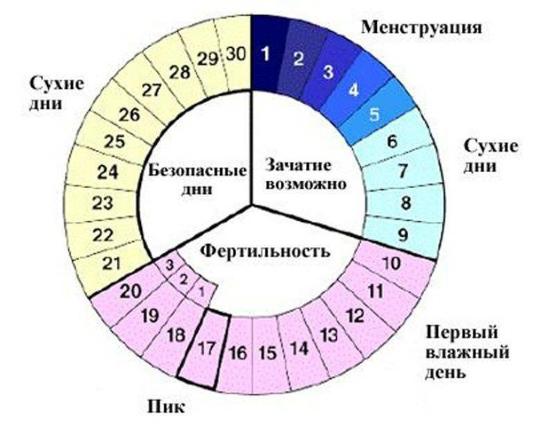 Как считать цикл месячных: примеры, онлайн калькулятор