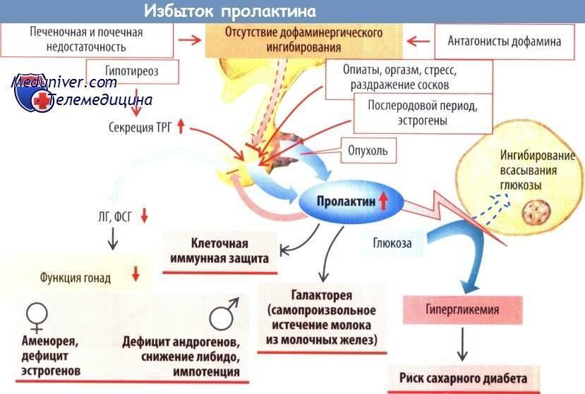 Метаболизм эстрогенов у женщин   клиника актуальной медицины