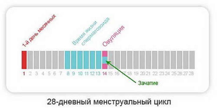 Сколько дней после овуляции возможно зачатие? - запись пользователя наталия логвинова (reibandt) (id2412653) в сообществе зачатие в категории месячный цикл - babyblog.ru