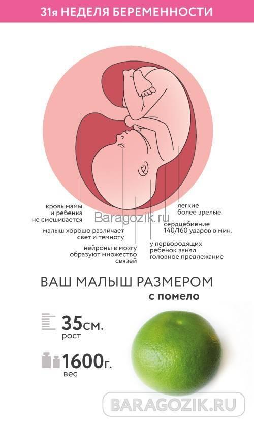 Пренатальная диагностика патологии плода | клиника семейный доктор