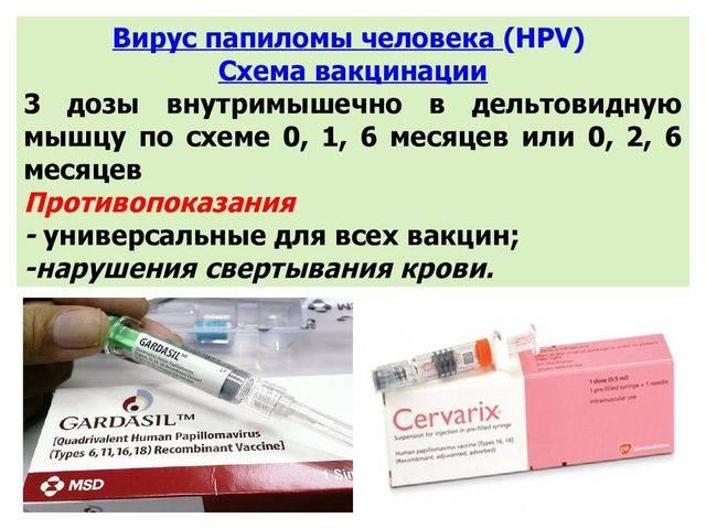 Прививка от впч: вакцины гардасил и церварикс — цены в москве | клиника семейный доктор