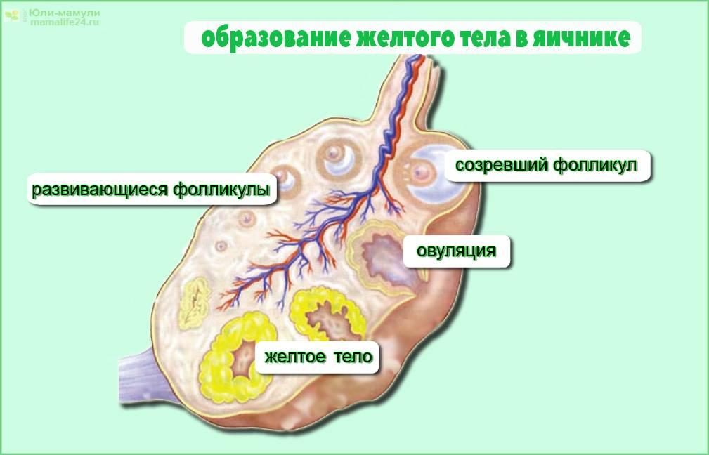 Коллагеноз -  заболевания соединительной ткани. симптомы коллагеноза. виды патологий соединительной ткани.!