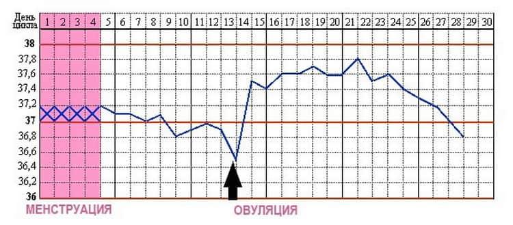 Базальная температура перед месячными: какая должна быть, норма и отклонения | vseoallergii.ru