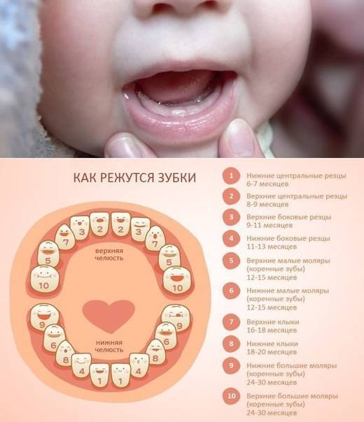 Когда у детей режутся первые зубы