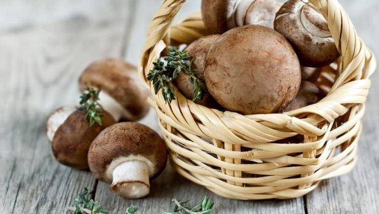 Можно ли грибы при грудном вскармливании: шампиньоны, маринованные