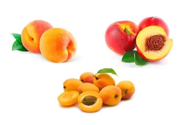 Можно ли персики при грудном вскармливании: полезные свойства, методика прикорма и противопоказания
