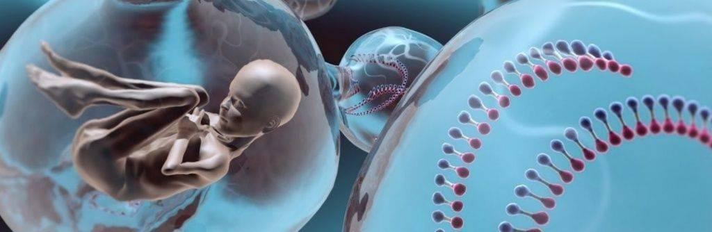 Судьба эмбрионов, оставшихся после эко   probirka