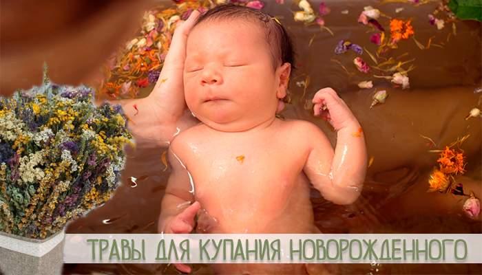 Череда для купания новорожденных в пакетиках как заваривать - моя крошка