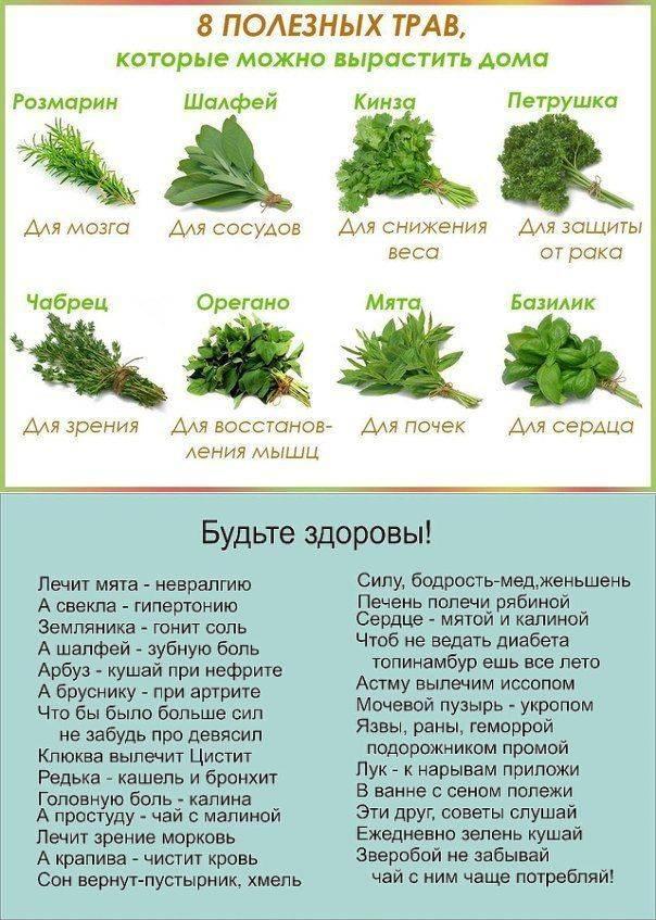 Можно ли зеленый укроп или его семена при грудном вскармливании? рецепты для лактации и другие нюансы
