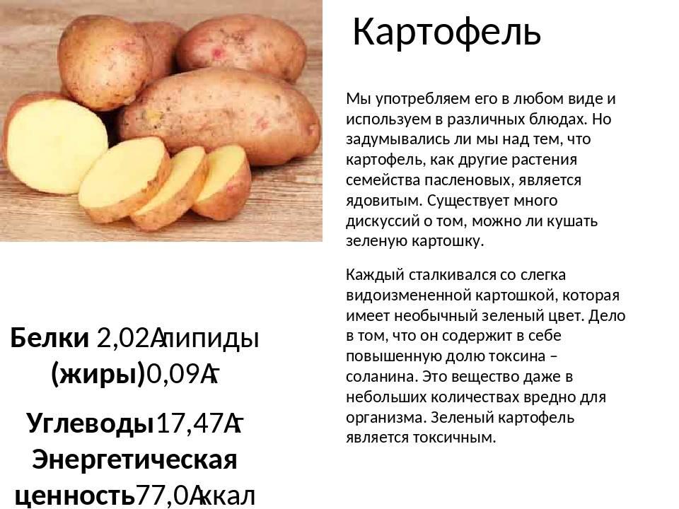 Картофельное пюре при грудном вскармливании - мамины новости