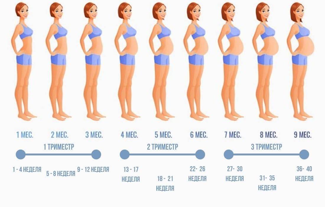 Когда, на каком сроке при беременности начинает расти грудь и насколько она увеличивается