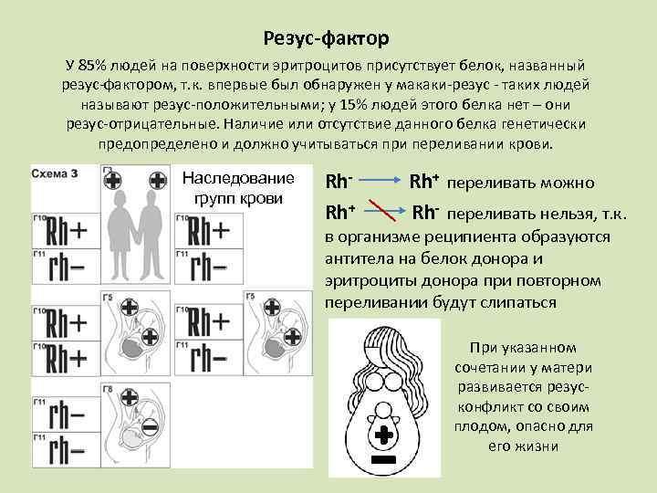 Группа крови детей и родителей: таблица, должна совпадать, может отличаться, пол ребенка