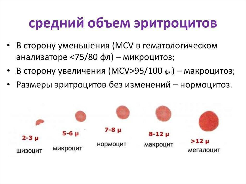 Как проводится и что показывают результаты клинического анализа крови?