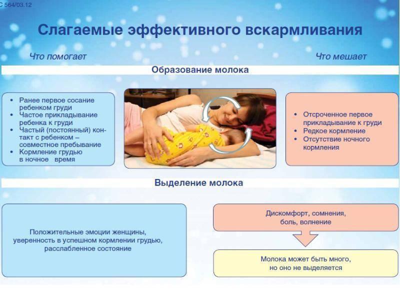 Основы грудного вскармливания