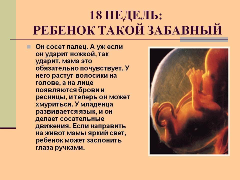 21 неделя беременности: что происходит с малышом и мамой, как часто должен шевелиться ребенок, норма веса — медицинский женский центр в москве
