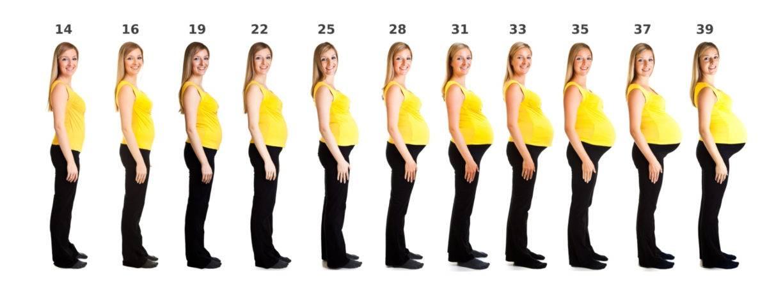 Когда увеличивается грудь при беременности: на сколько, сроки
