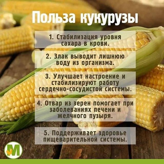 С какого возраста ребенку можно давать кукурузу и в каком виде?