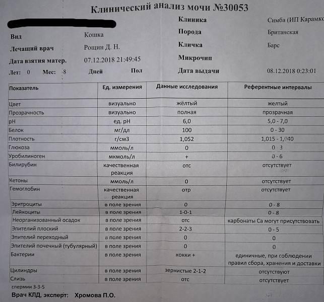 Какой пульс считается нормальным, сводная таблица значений чсс по возрасту и полу