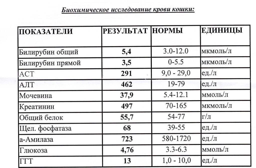 Биохимический анализ крови у взрослых и детей (норма)