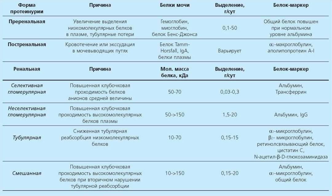 Белок в моче (протеинурия)