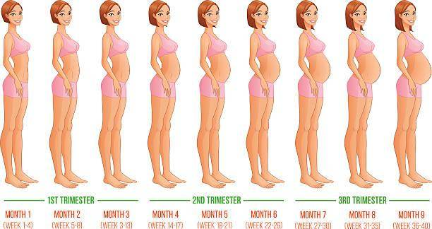Живот во время беременности: от чего зависит размер и форма?
