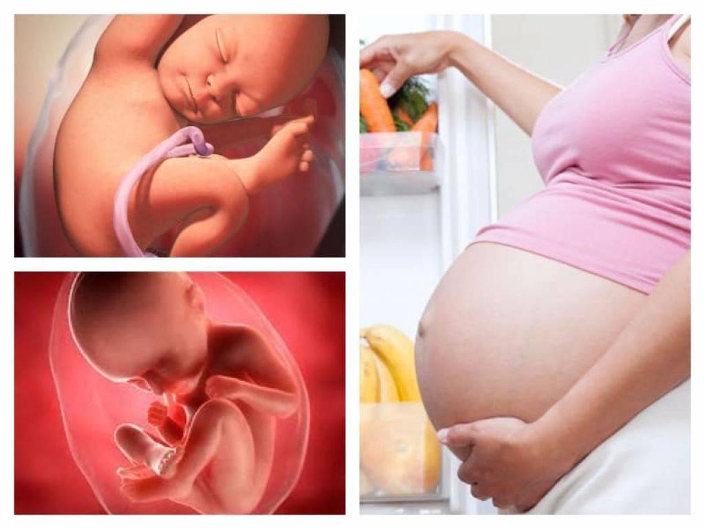 36 неделя беременности: узи плода на 36 неделе
