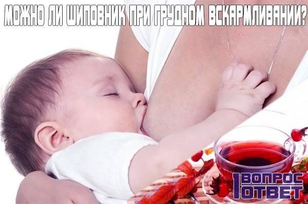Шиповник при грудном вскармливании: можно ли пить отвар шиповника кормящей маме при лактации и кормлении новорожденного