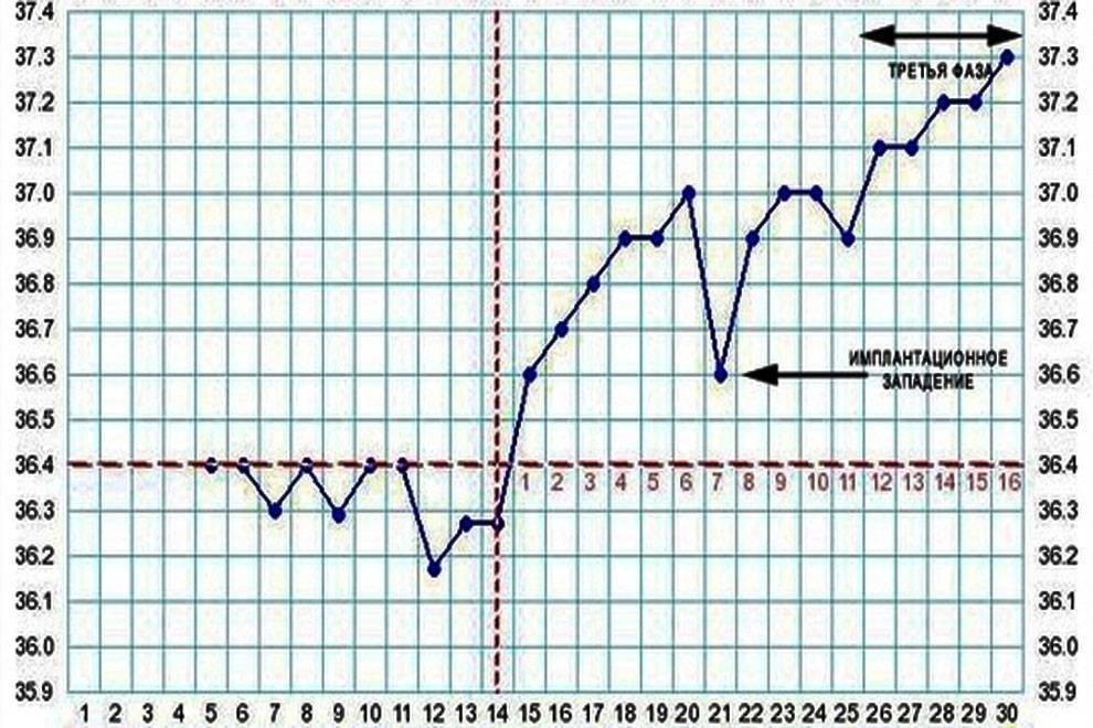 Как измерить базальную температуру для определения овуляции и беременности? узнайте, как правильно измерять базальную температуру. - автор екатерина данилова - журнал женское мнение