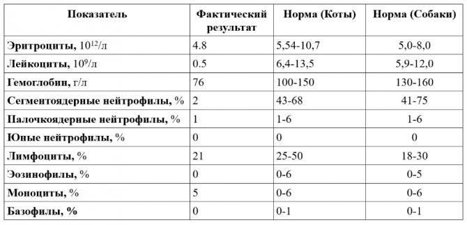 Повышены нейтрофилы у ребенка: сегментоядерные и палочкоядерные в крови, о чем это говорит, при понижении лимфоцитов и моноцитов, с соэ, повышено абсолютное содержание