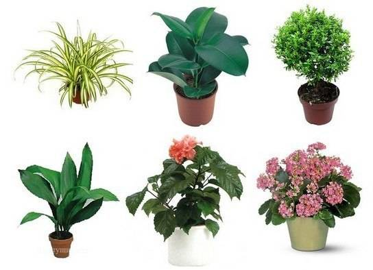 Растения и цветы для детской комнаты   tobehome.ru