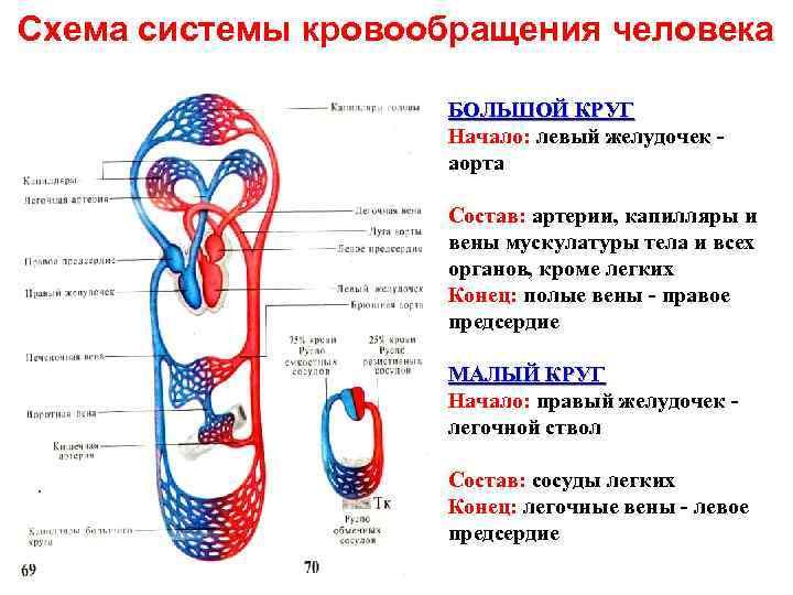 Оценка кровотока в системе мать-плацента-плод