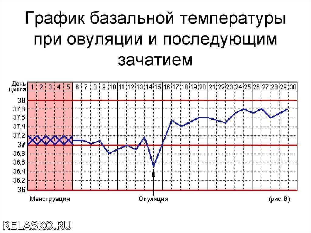 Как измерить базальную температуру для определения беременности и каким градусником пользоваться, базальная температура как правильно измерять, измерение базальной температуры, как померить.