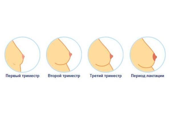 Когда начинает болеть грудь при беременности, причины боли в груди на раннем сроке  |             эко-блог
