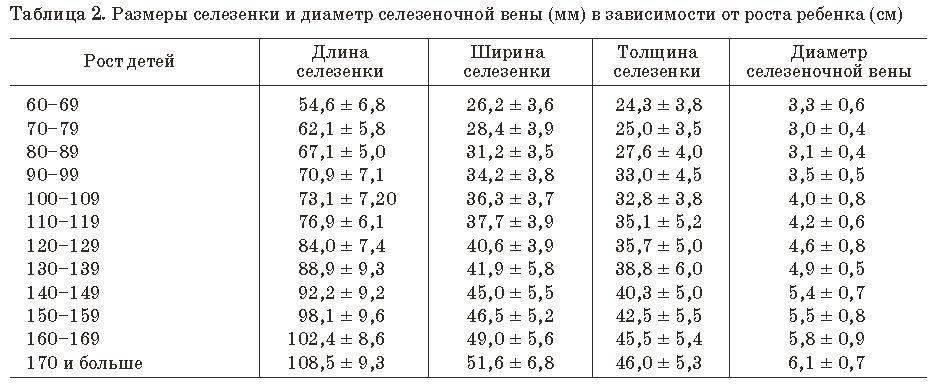 Размеры печени на узи (лекция на диагностере) - диагностер