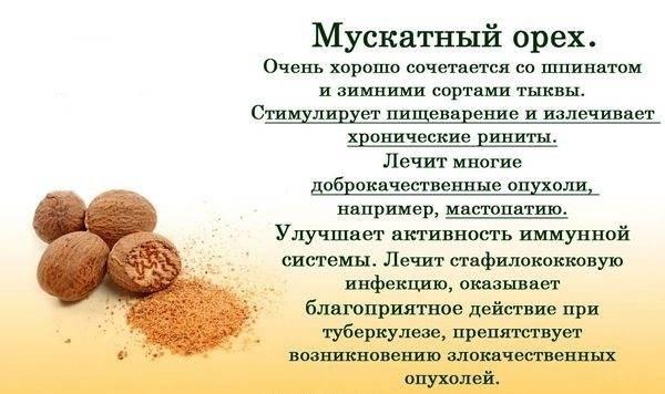 Орехи при беременности: можно ли есть, какие орехи самые полезные и в чем заключается их польза