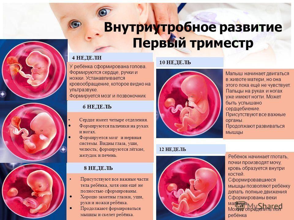 Во сколько недель (на каком сроке беременности) начинает шевелиться ребенок?