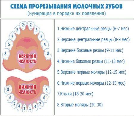 Аномалии зубов | аномалии положения, числа, формы и размера зубов