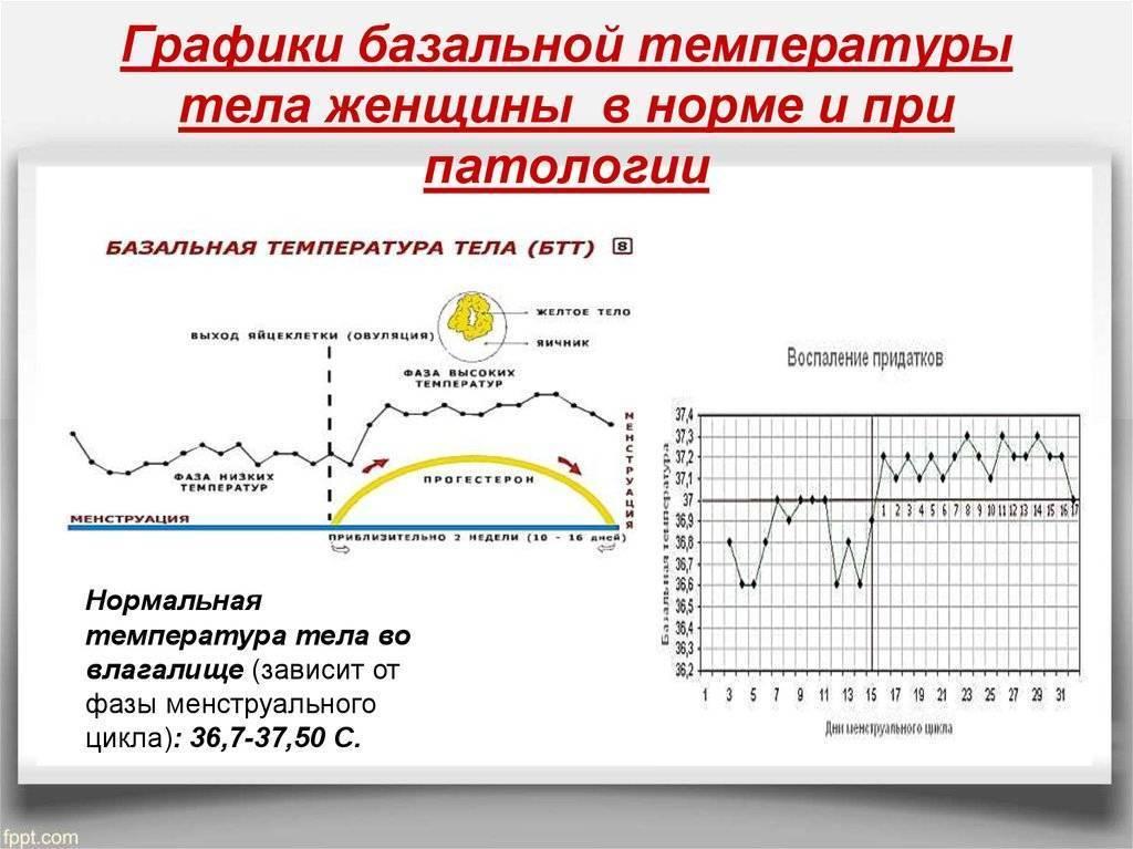 Температура перед месячными: какие температурные показатели считаются нормой и отклонением?
