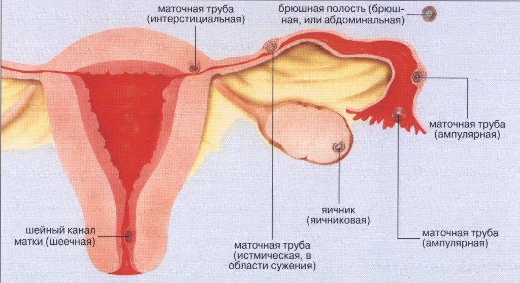 Пульсация в области яичников (правом, левом) - причины и лечение