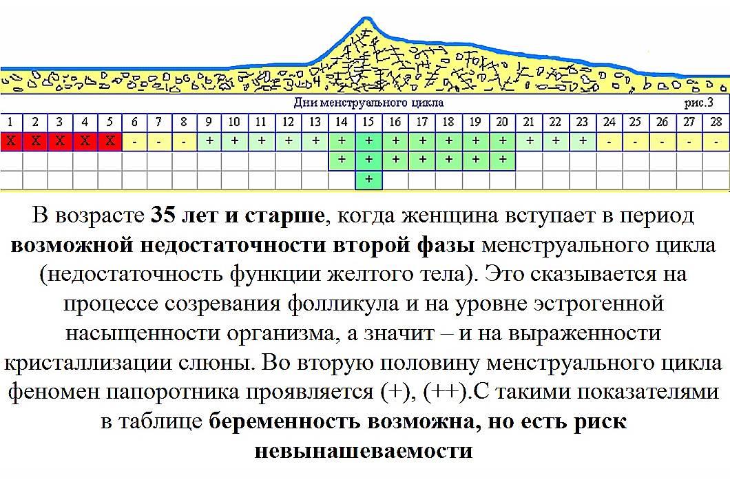Календарь овуляции для зачатия: калькулятор наиболее подходящих дней