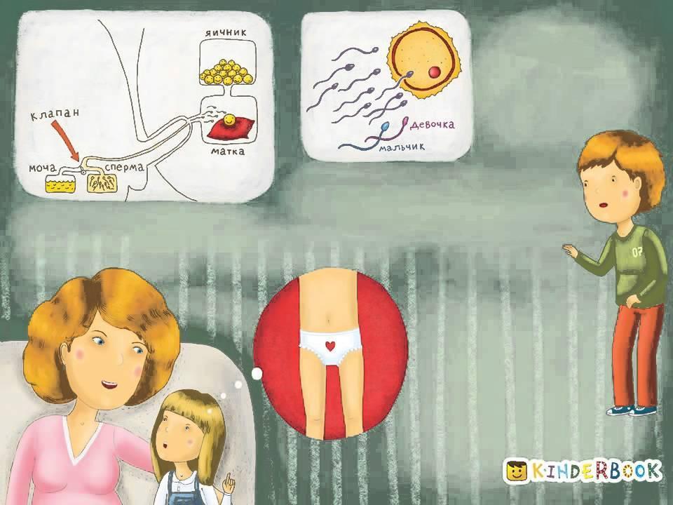 Как рассказать ребенку, откуда берутся дети: типичные ошибки и советы психологов