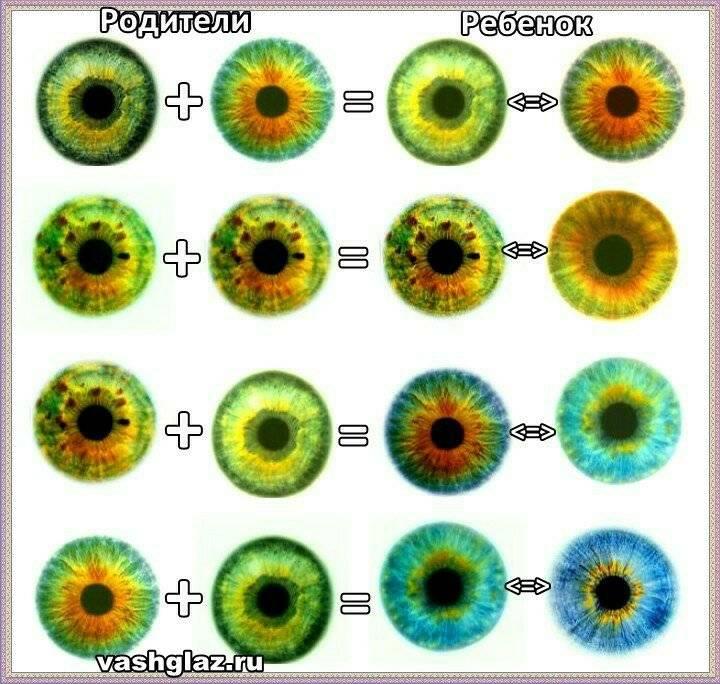 Когда и как меняется цвет глаз у новорожденных детей