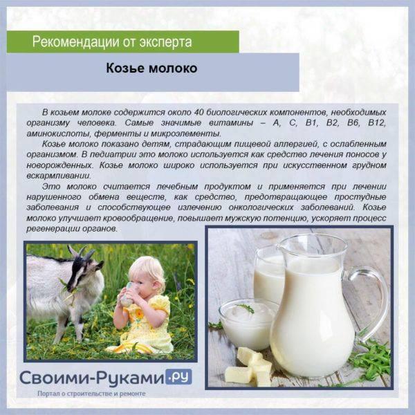 Чем отличается кобылье молоко от коровьего и рассказ о молочной конеферме в польше